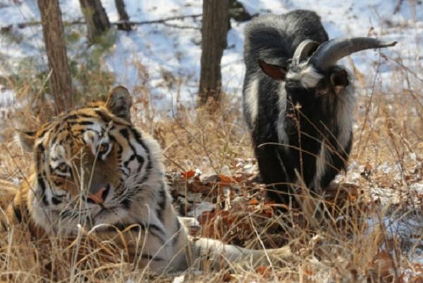 Фото: safaripark25.ru